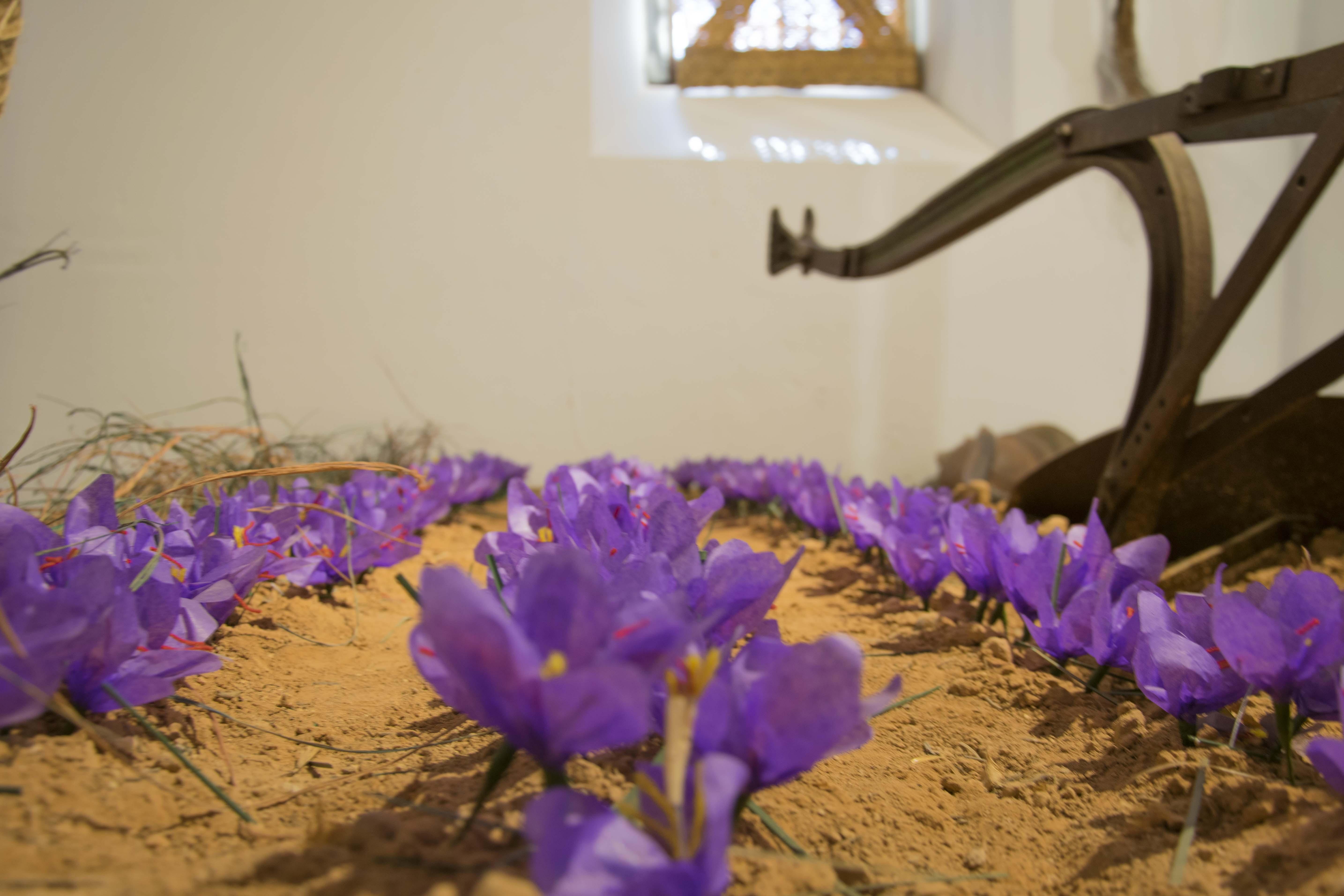 museo azafran y etnografico madridejos