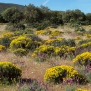 medio natural sierra valdehierro madridejos