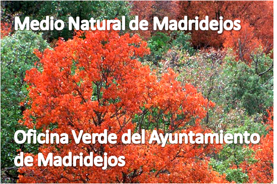 medio natural madridejos