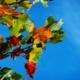 arbol hojas parque