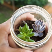 ecosistema vegetal