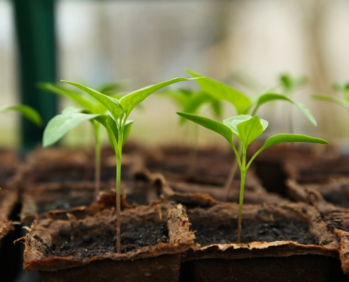 planta semillero invernadero