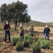 novartis reforesta global nature aytomadridejos