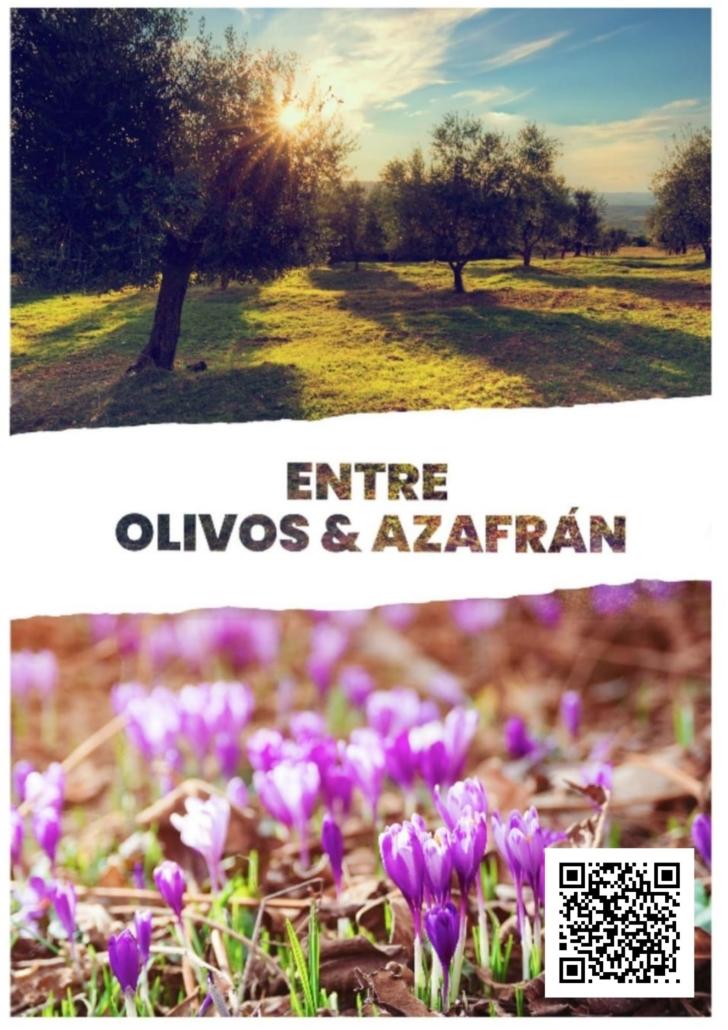 entre olivos y azafran - madridejos